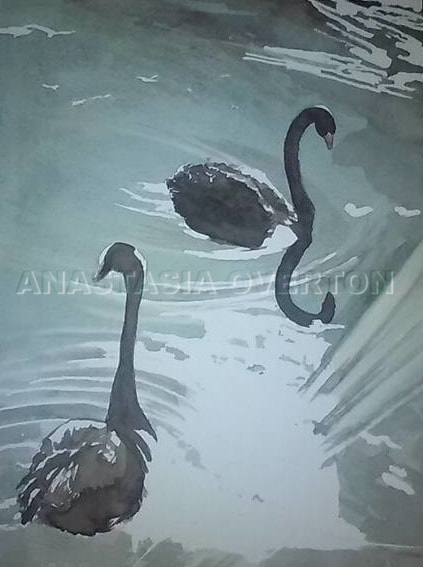 """Black Swans"" watercolor by Anastasia Overton"